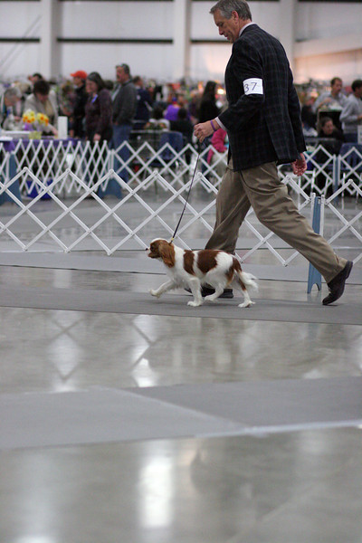 2011 Albany Dog Show