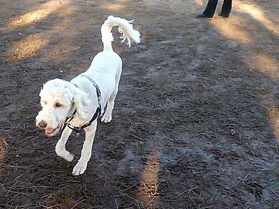 El Segundo Dog Park