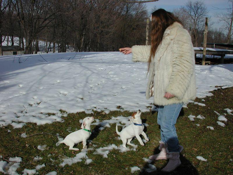 Feb 05- Puppies 011.jpg