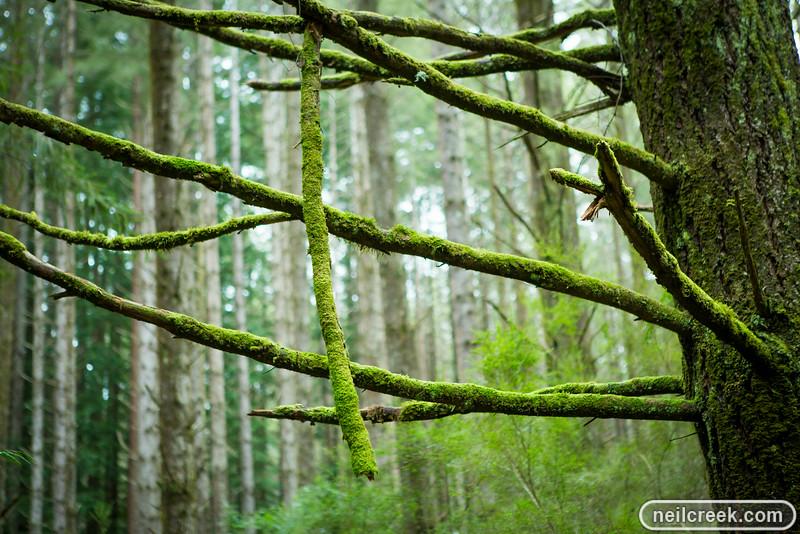 creek-140819-155.jpg