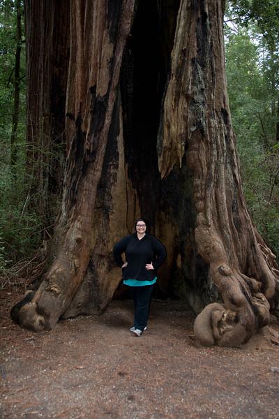 Redwood-23.jpg