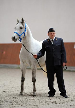 Roma Arabians