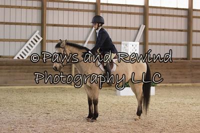 Pleasure Horse Or Pony