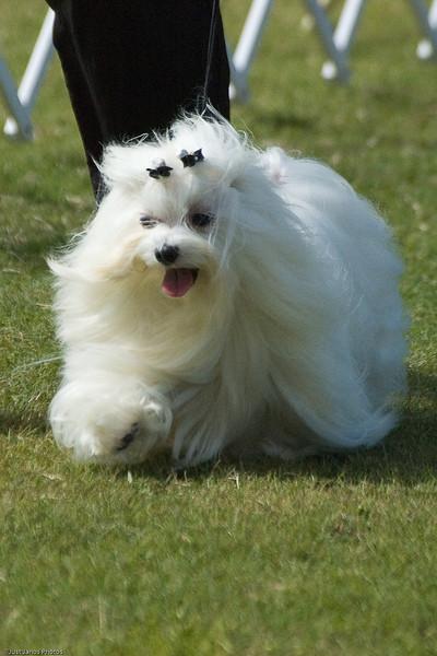Boca Raton Dog Show-38.jpg