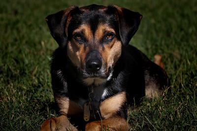 Marbury - Dix Family Pets 8-30-19