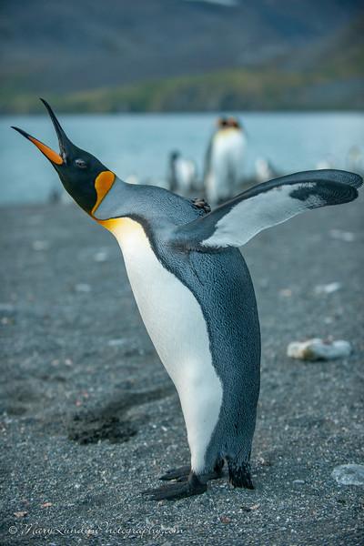 Antarctic-76