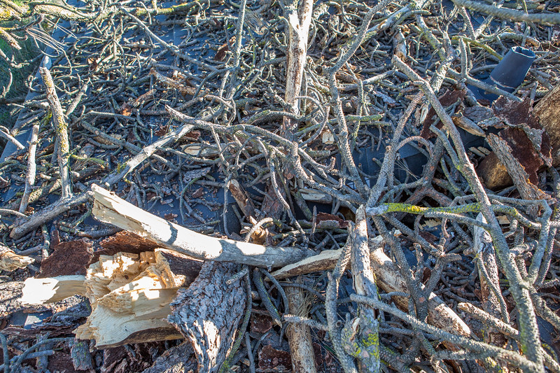5671 Wallace Ave - Tree 1030am 12 16 2017 Extremly Windy Conditions-69.jpg