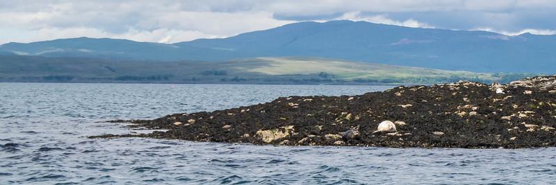 We saw seals