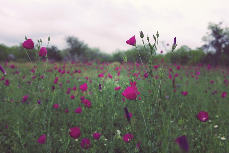 wine flowers.jpg