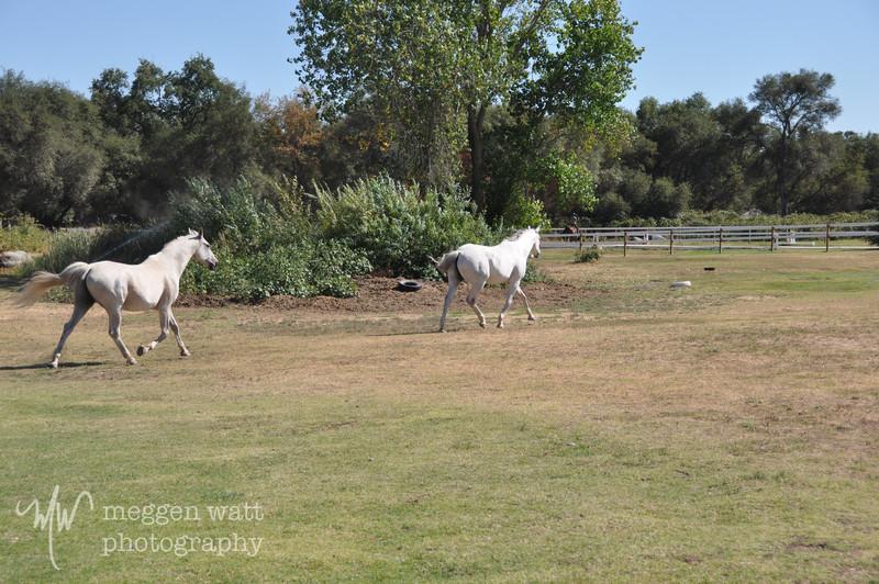 EB&Horses-131.jpg