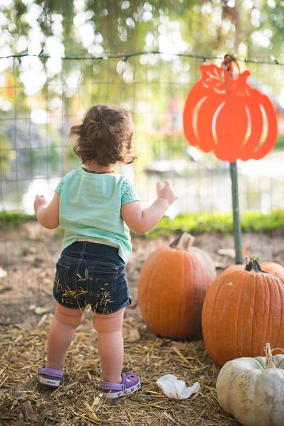 Stevies First Pumpkins-4541.jpg