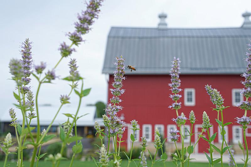 Arboretum, July Harvest-75.JPG