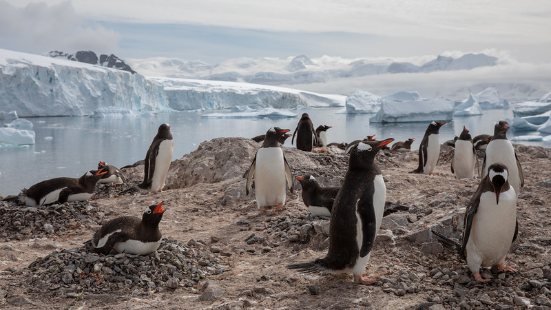 2019_01_Antarktis_03138.jpg