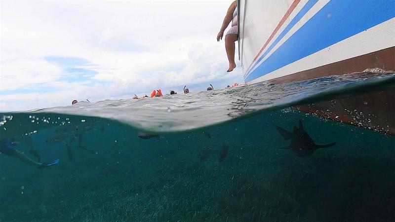 Shark (2).jpg