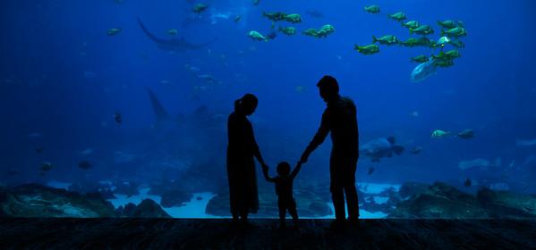 2016_10_02 Georgia Aquarium