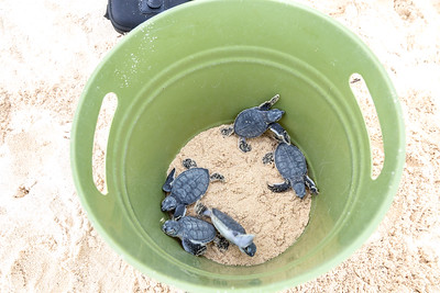 Turtle Rescue - Cozumel