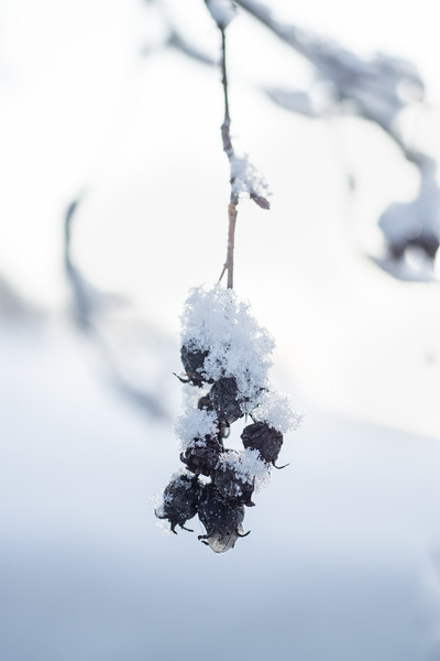 Winter's soft touch