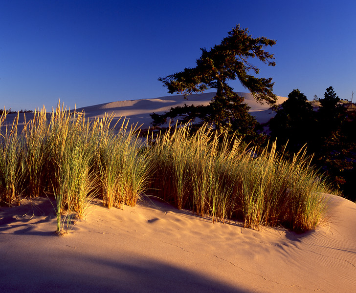 Dunes early light horiz.jpg