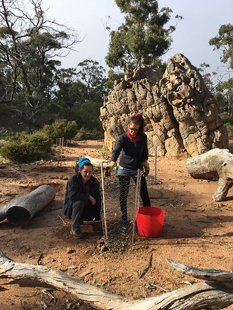 Revegetation - Pines Campground and Beyond 2 2018