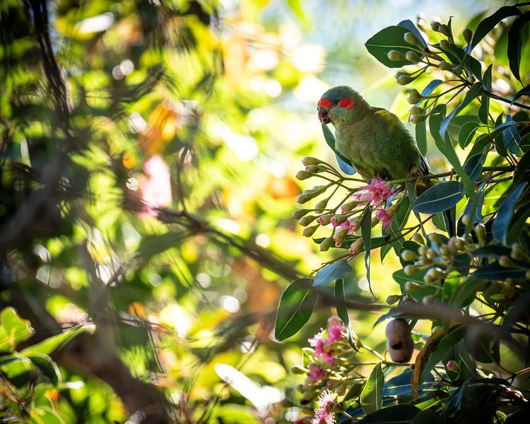 011119 birds  _1.JPG
