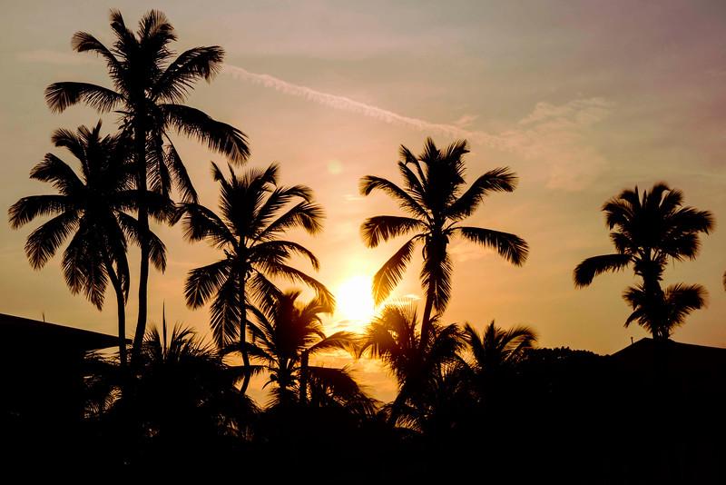 palmsatsunrise.jpg