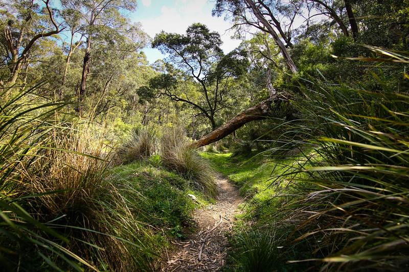 Lerderderg State Park, Victoria, Australia