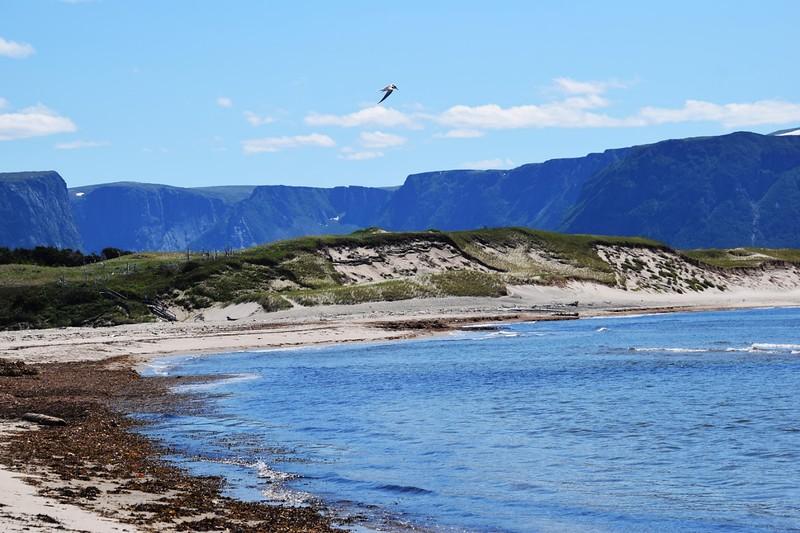 rocky beach with bird flying over
