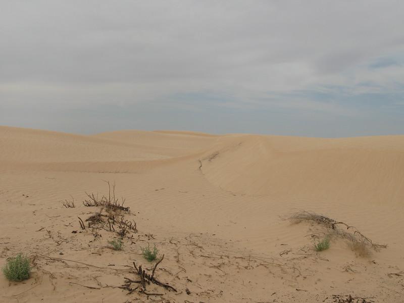 Dunes Ripples across dune face (2).jpg