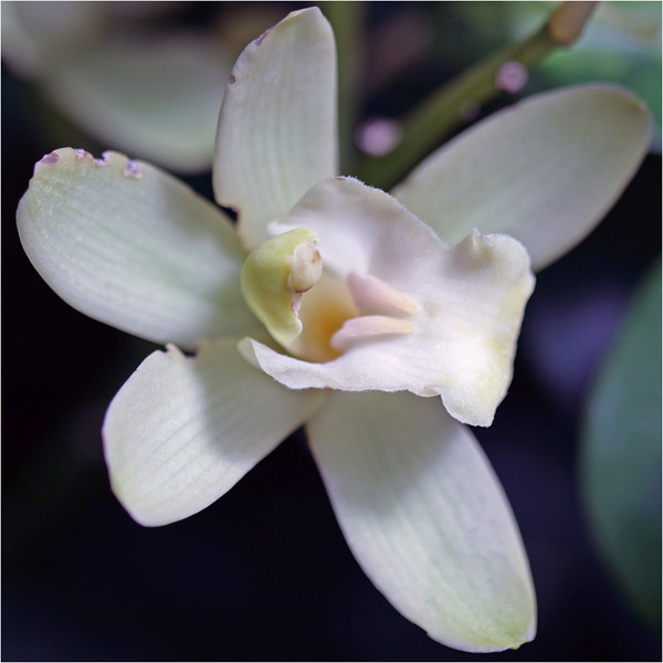 Flower_4_032610_040210.jpg