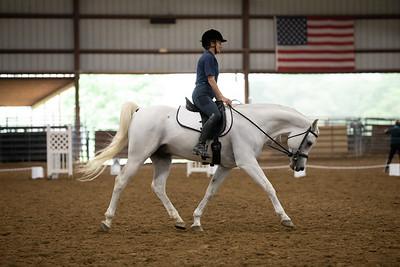 Horse 30
