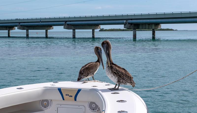 Florida-Keys-Islamorada-Robbies-Marina-Sundance-Waterspots-Parasailing-07.jpg