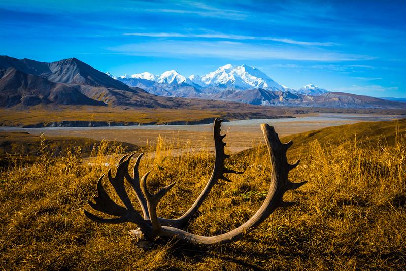 Denali-National-Park-103.jpg