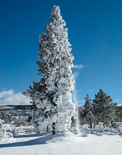 Trees_Frosted-3.jpg