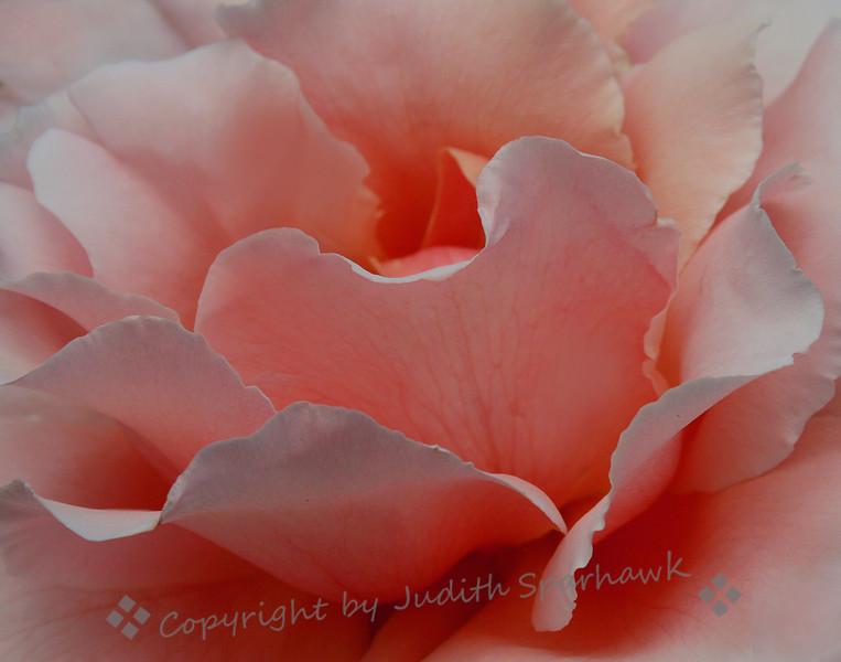 Petal Pink.jpg