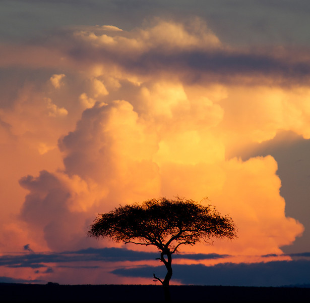 African Sunset with Tree & Dramatic Clouds