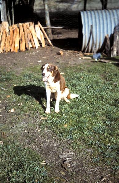 1960-6 (15) Bob.JPG