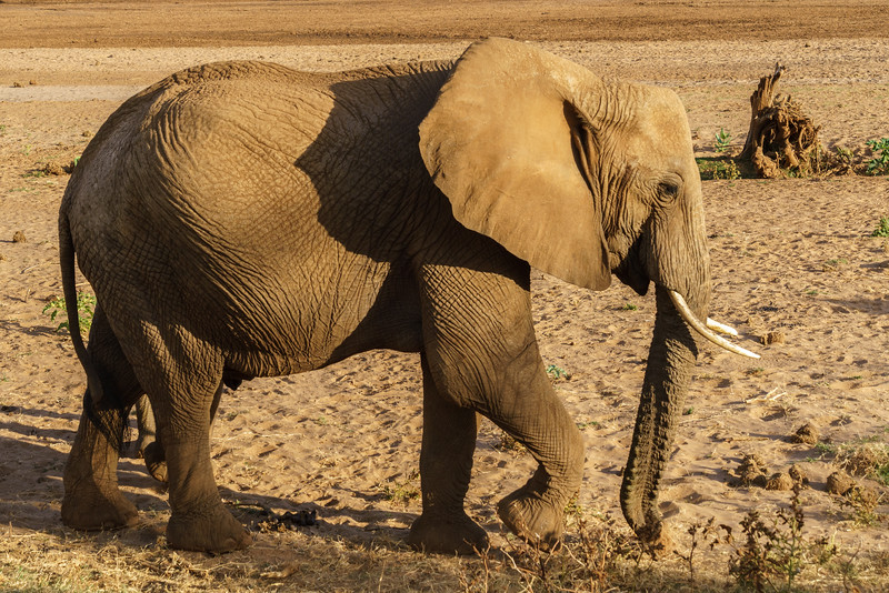 Kenya 2015-01124.jpg