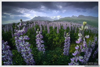 Iceland Summer 2021