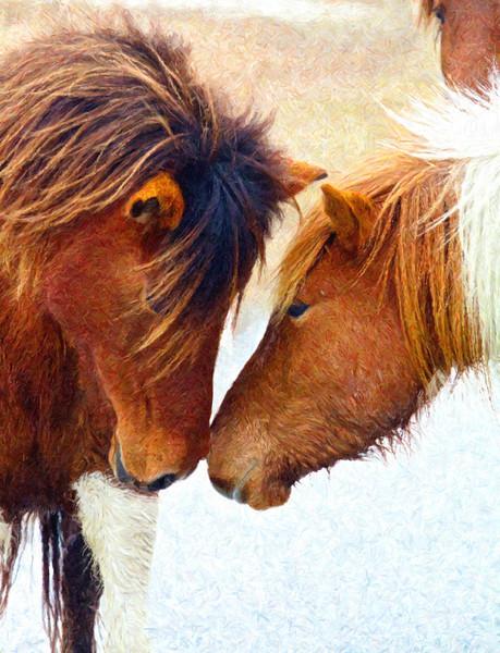 Marsh Ponies of Assateague