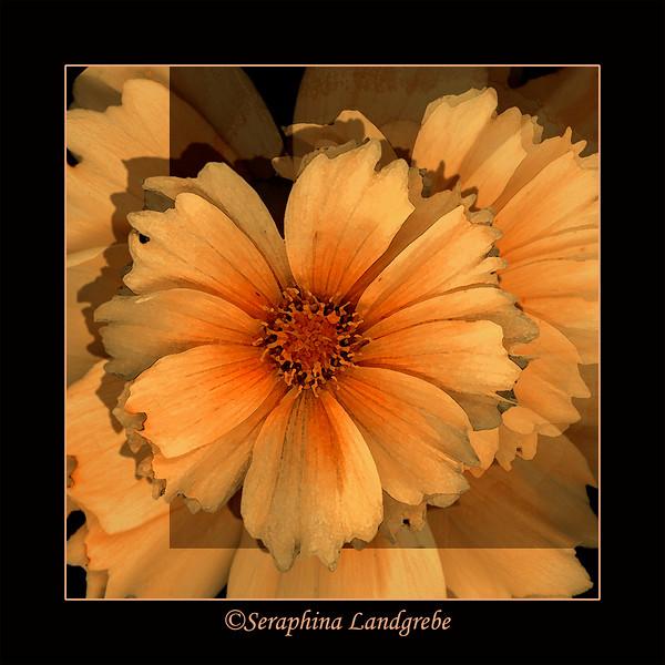 sunflowerPEACH SQ-2.jpg