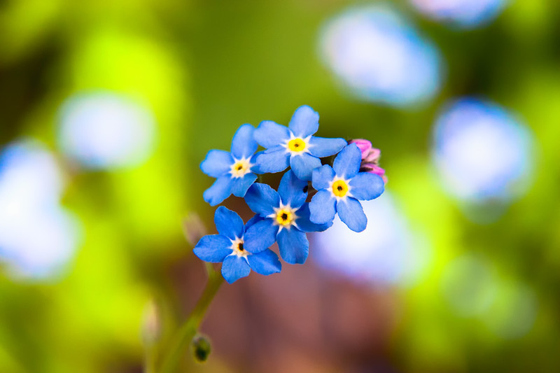 """Forget me not"""