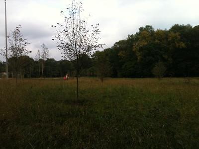 2011-09-20 Meadow