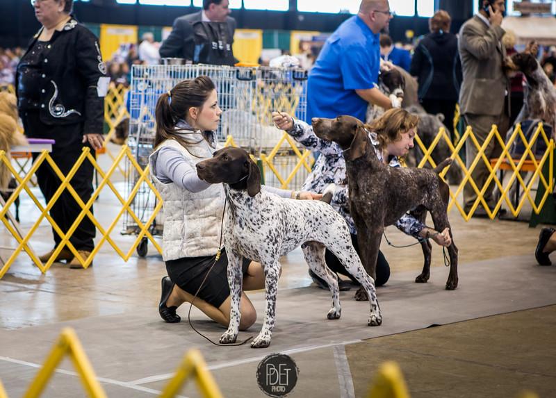 International Kennel Club of Chicago