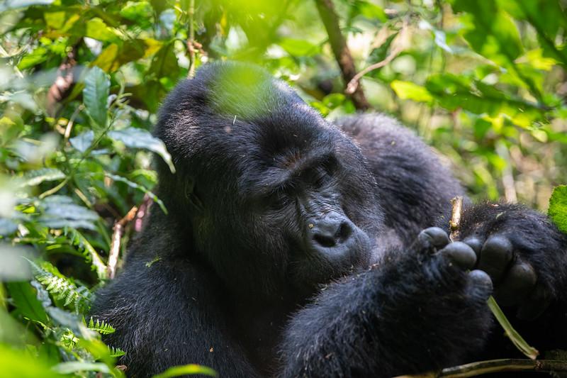 Uganda_T_Gor-198.jpg