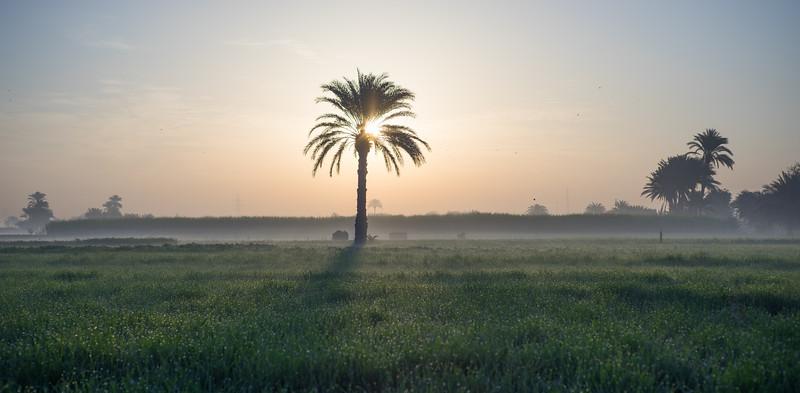 Amanecer en los campos del valle del Nilo. Luxor. Egipto