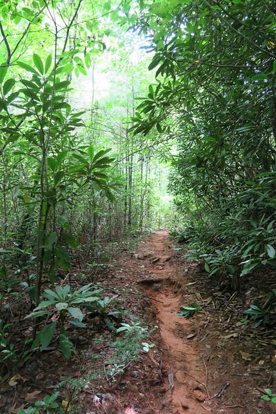 Thompson River Trail - 2,780'