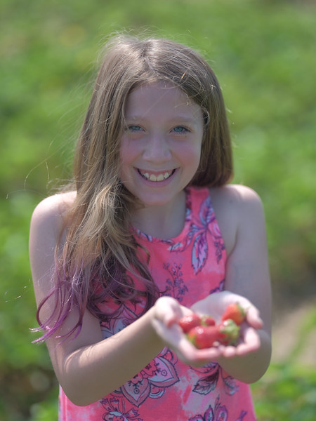 June 17, 2018 - Strawberry Picking for Fathers Day-215.jpg