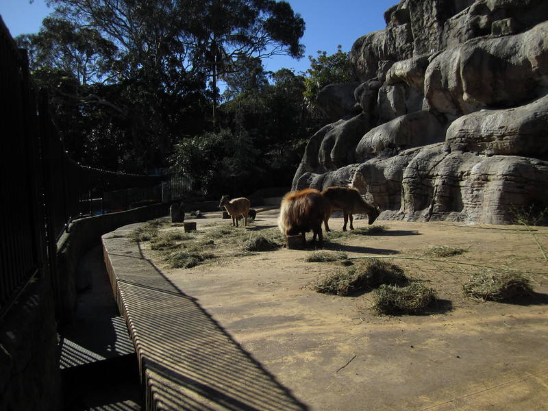 Sydney - Sydeny Zoo-109.JPG