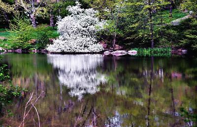 Spring 2011 - Central Park