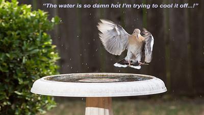 Birdbath Splashing Scenes